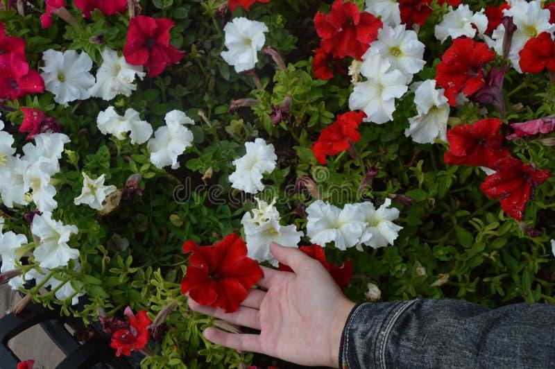 Flores en macizo de flores imágenes de archivo libres de regalías
