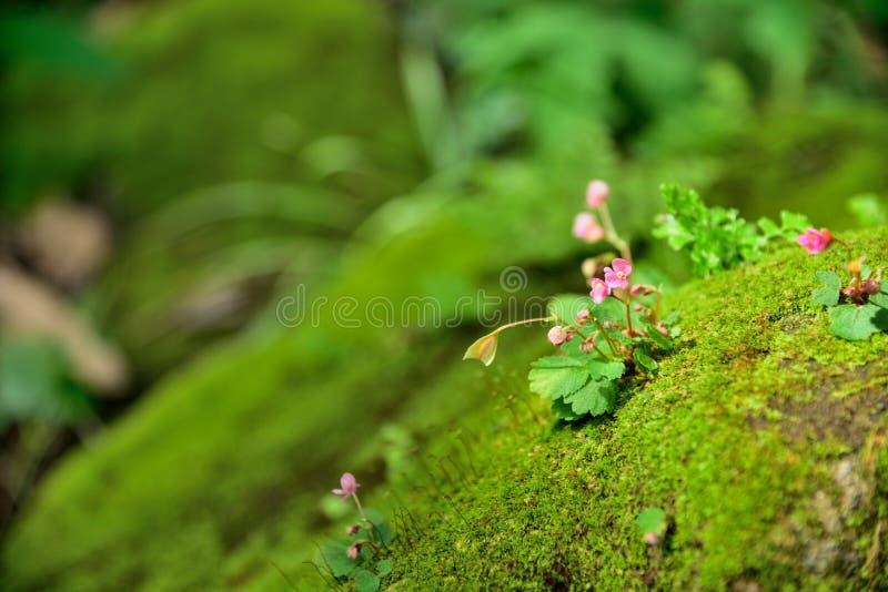 Flores en naturaleza en fondo de la naturaleza imagen de archivo