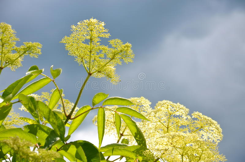 Download Flores En New Hampshire En Tiempo De Verano Foto de archivo - Imagen de nuevo, flores: 42439240