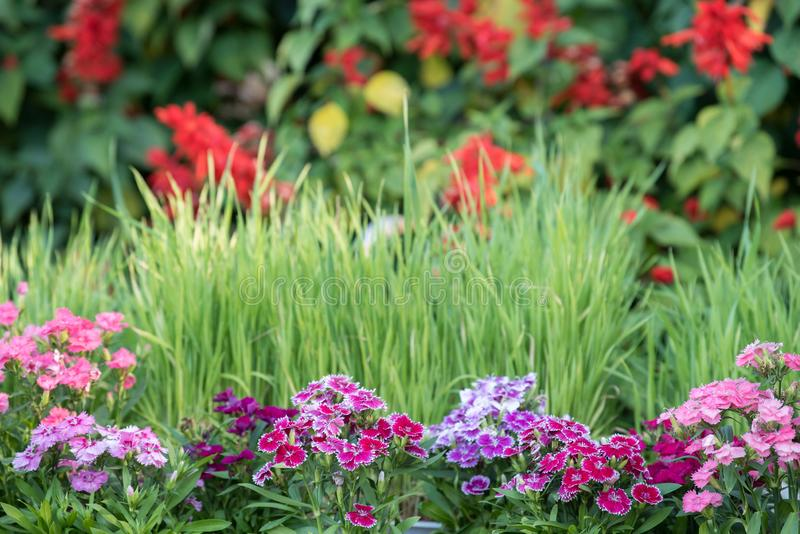 Flores en primavera en el jardín foto de archivo libre de regalías