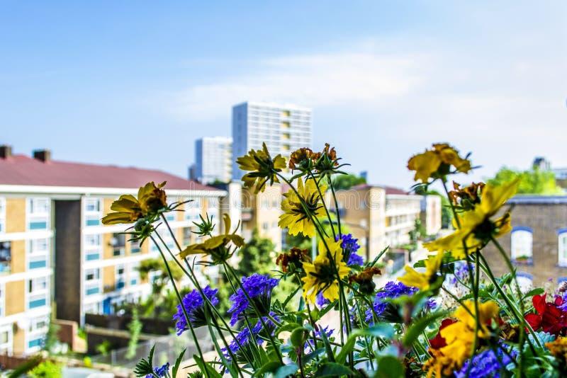 Flores en primero plano y edificios en fondo fotos de archivo