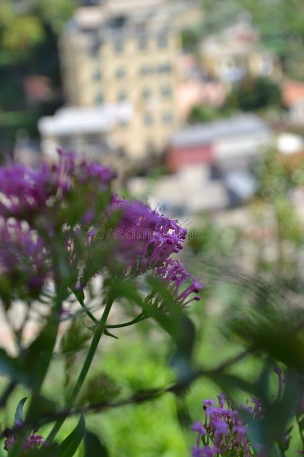 Flores en Riomaggiore, Italia imágenes de archivo libres de regalías