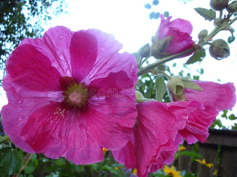 Flores en Ucrania fotos de archivo libres de regalías