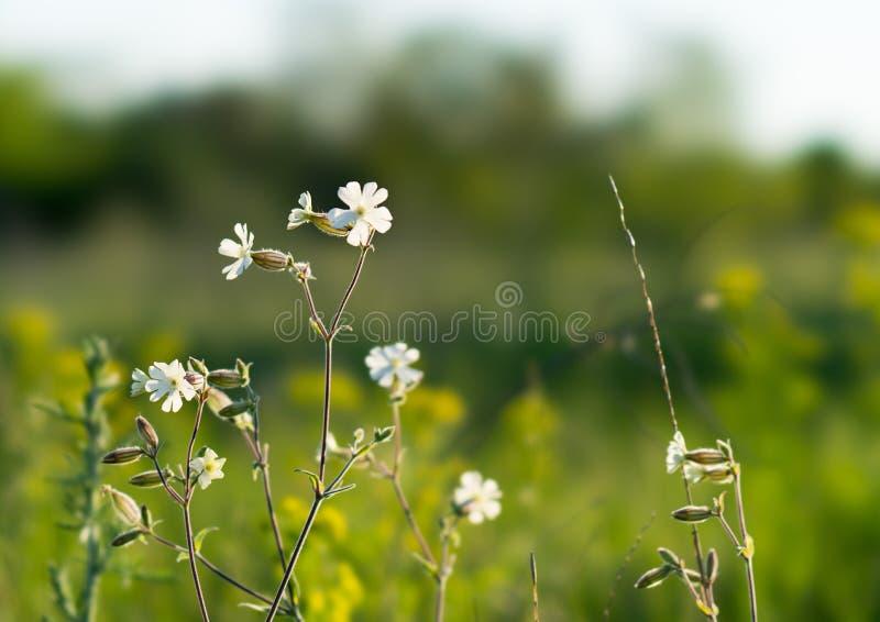 Flores en un claro en Taganrog fotos de archivo libres de regalías