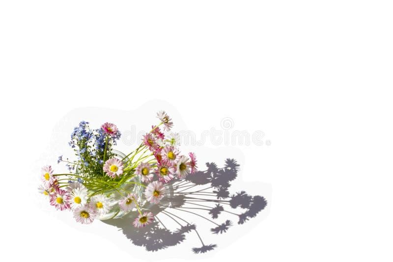 Flores en un florero con una sombra clara en un fondo blanco aislado imágenes de archivo libres de regalías