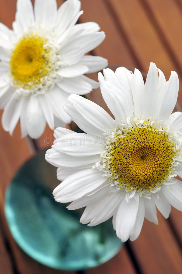 Flores en un florero de cristal imagen de archivo