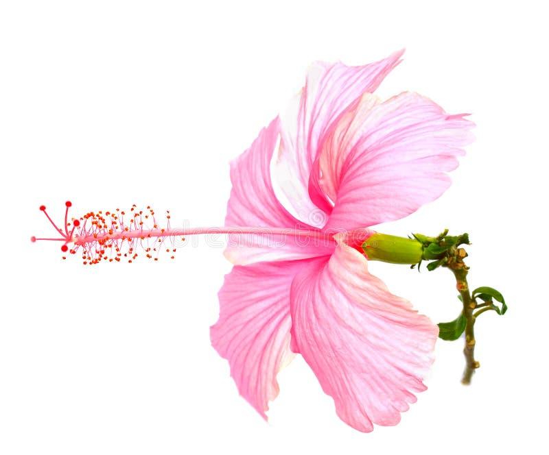 Flores en un fondo blanco foto de archivo libre de regalías