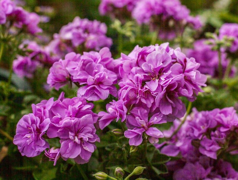 Flores en un jardín en Londres, Inglaterra - un día soleado, verano 2018 fotos de archivo
