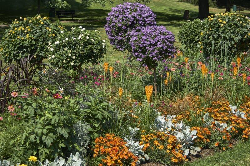 Flores en un parque en un día soleado fotografía de archivo