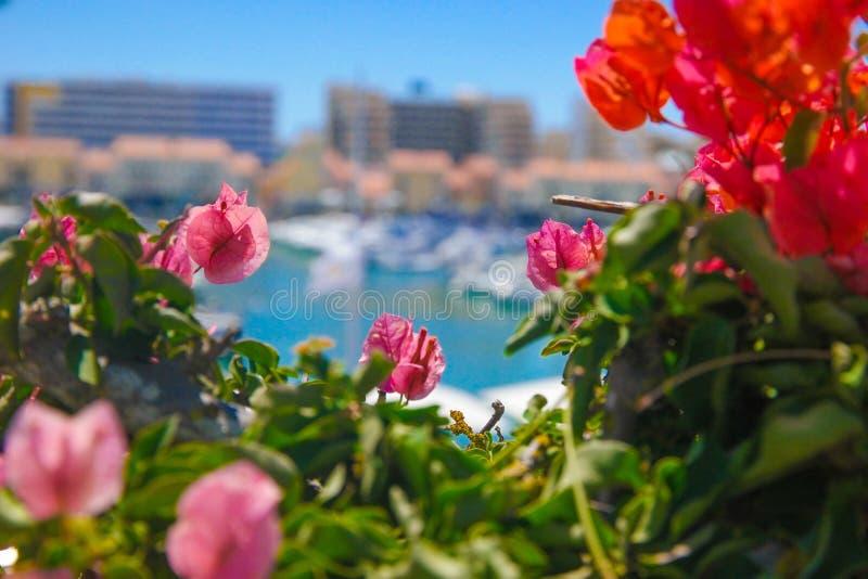 Flores en un puerto fotos de archivo