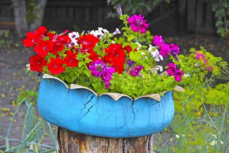 Flores en un tocón imágenes de archivo libres de regalías
