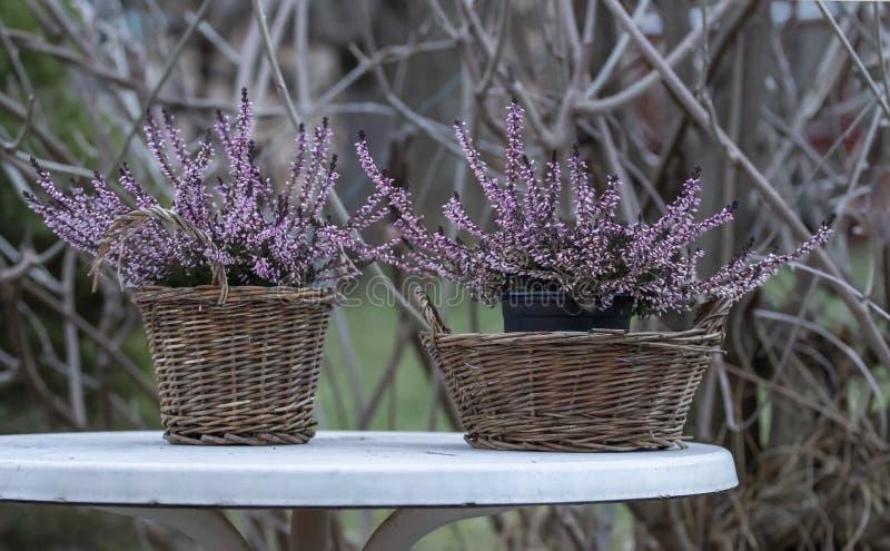 Flores en una cesta, brezo imágenes de archivo libres de regalías