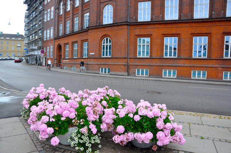 Flores en una esquina en la ciudad de Aarhus fotos de archivo libres de regalías
