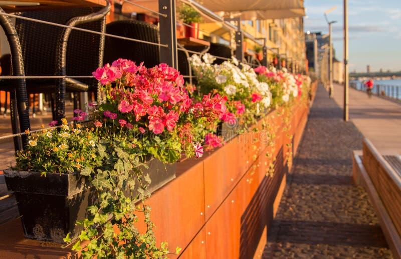 Flores en una 'promenade' imagen de archivo libre de regalías
