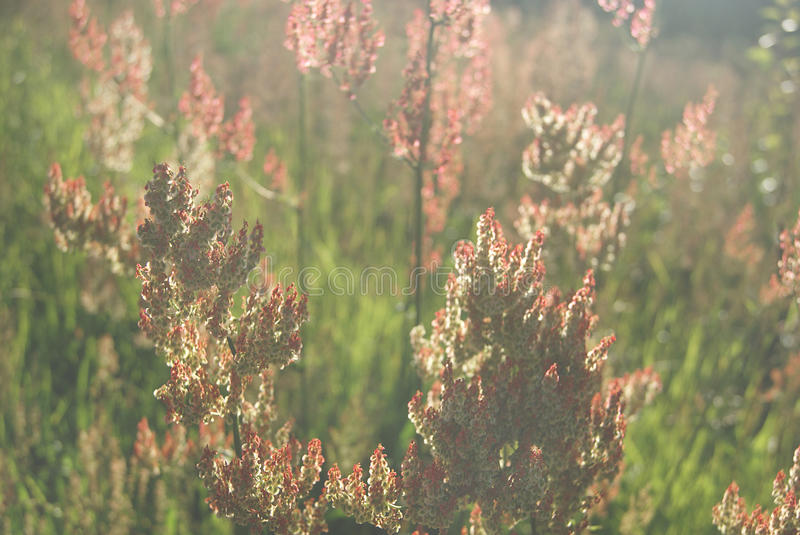 Flores ensolaradas fotos de stock