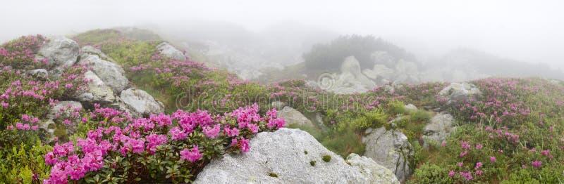 Flores entre as pedras imagens de stock royalty free