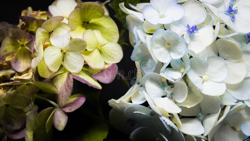 Flores, España, 2016 imagen de archivo