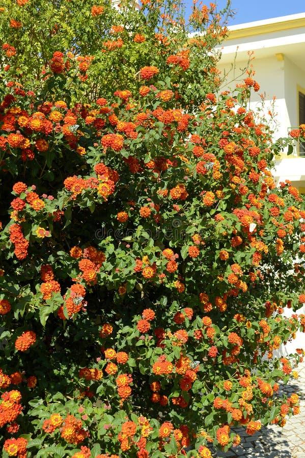 Flores espanholas da bandeira imagens de stock royalty free