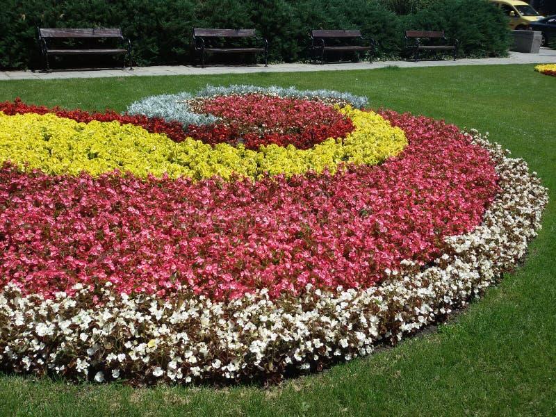 Flores espirales en Sofía - verano 2015 fotografía de archivo