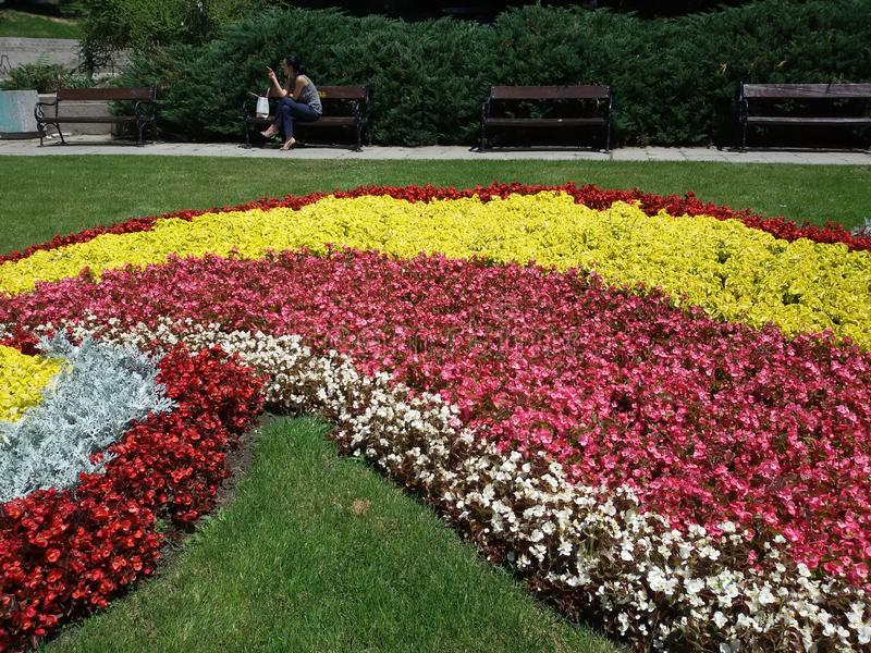 Flores espirales - verano de Sofía fotografía de archivo libre de regalías