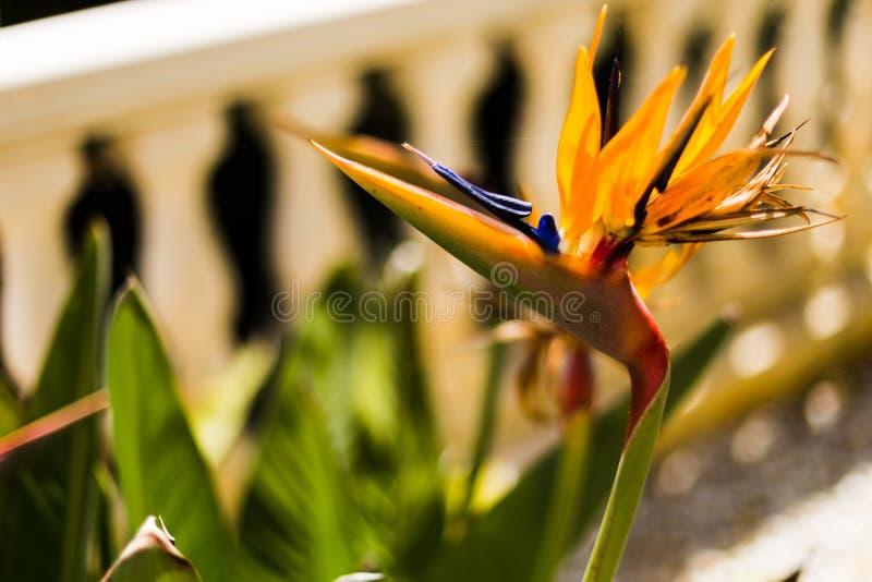 Flores exóticas coloridas no jardim em um dia ensolarado fotos de stock