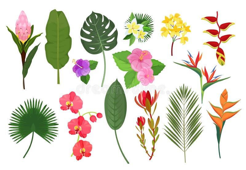 Flores exóticas decorativas Plantas tropicales de hoja botánica ramo para la decoración ilustración vectorial ilustración del vector