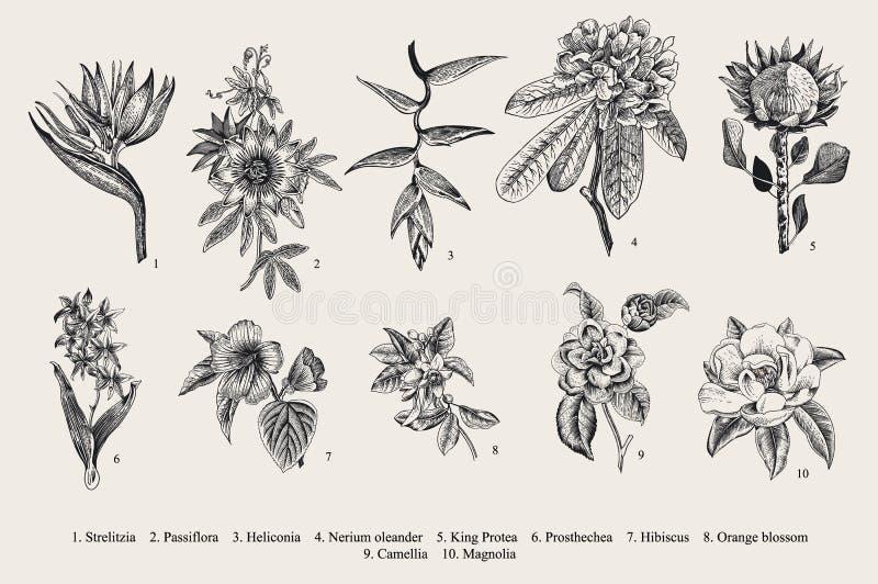 Flores exóticas fijadas Ejemplo botánico del vintage del vector ilustración del vector
