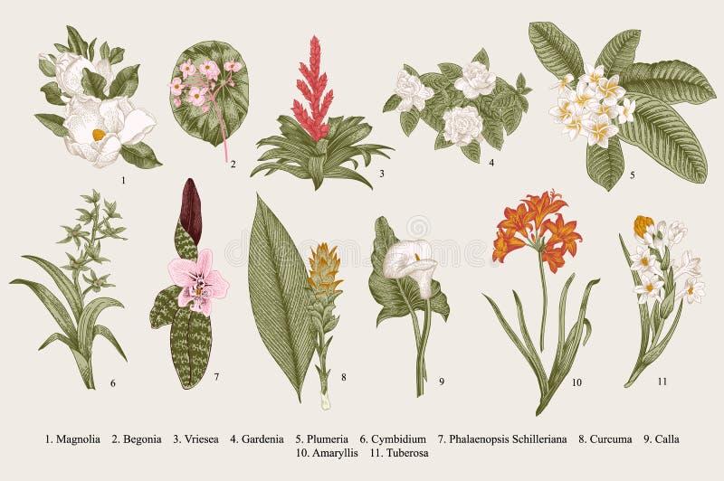 Flores exóticas fijadas Ejemplo botánico del vintage del vector stock de ilustración