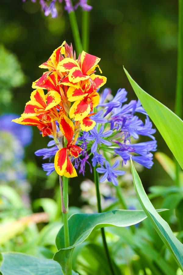 Flores exóticas no palácio de Monserrate em Sintra imagem de stock