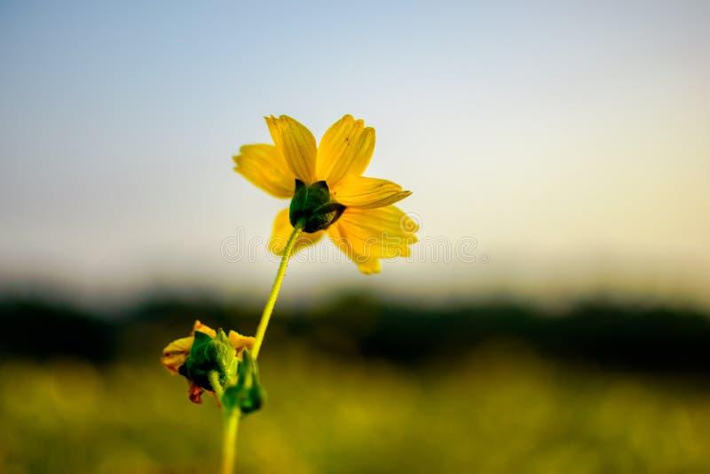 Flores - felizes e tristes imagem de stock