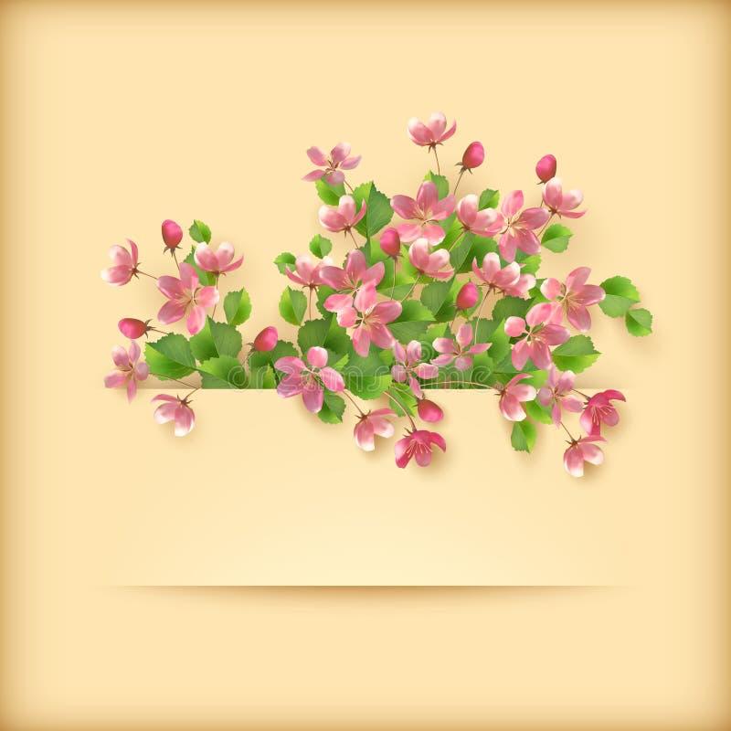 Flores florais da flor de cerejeira do rosa do cartão ilustração stock