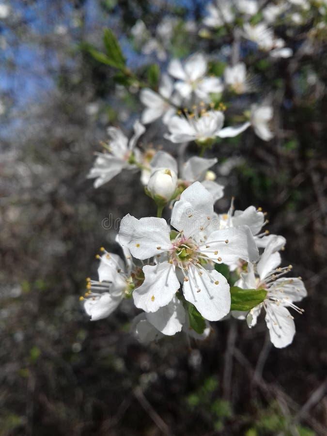 Flores florecientes foto de archivo libre de regalías