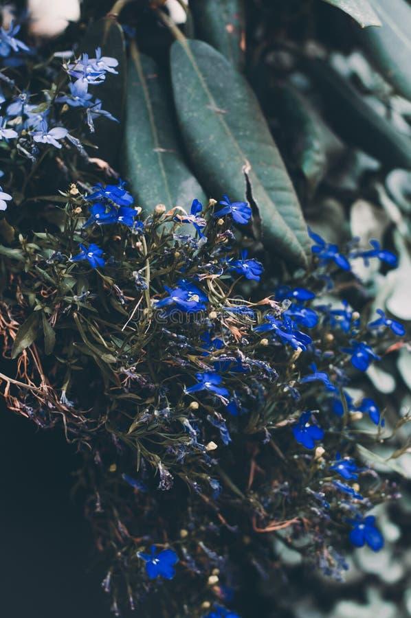 Flores florecientes azules del misterio pequeñas cerca para arriba Naturaleza macra foto de archivo libre de regalías