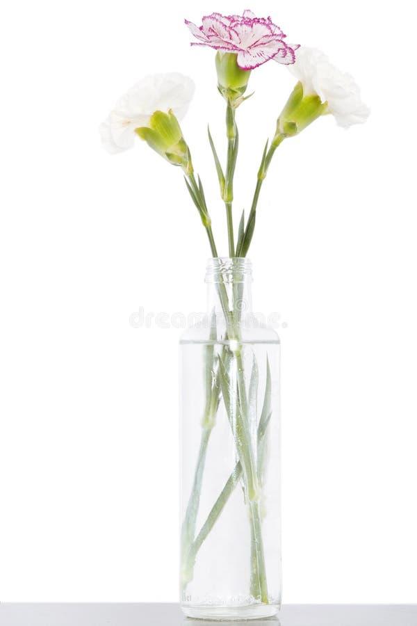Flores florecientes blancas y rosadas del árbol del clavel imagenes de archivo