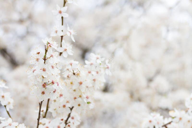 Flores florecientes de la primavera imágenes de archivo libres de regalías