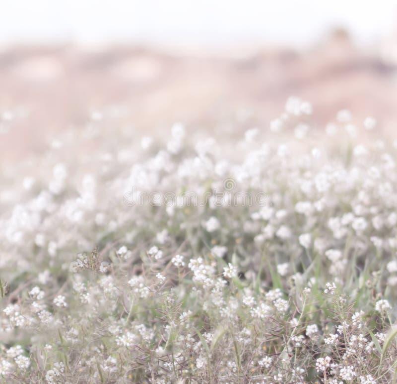 Flores florecientes del blanco foto de archivo