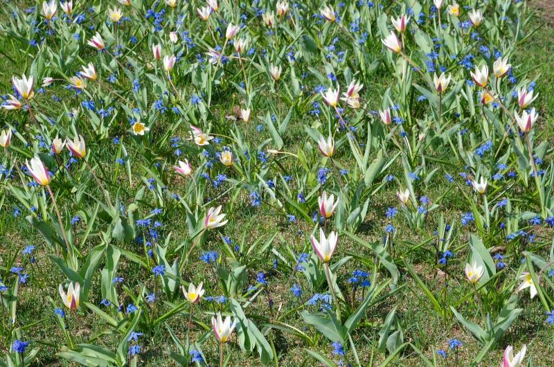 Flores florecientes del resorte fotos de archivo