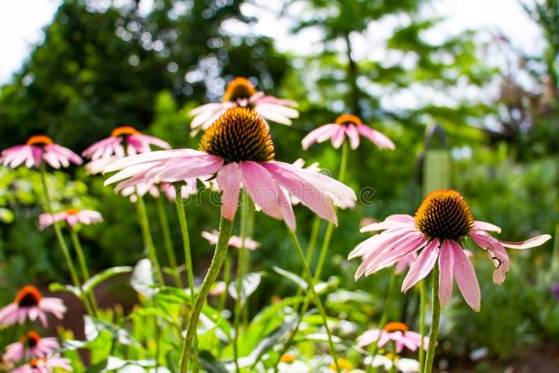 Flores florecientes en Denver fotografía de archivo
