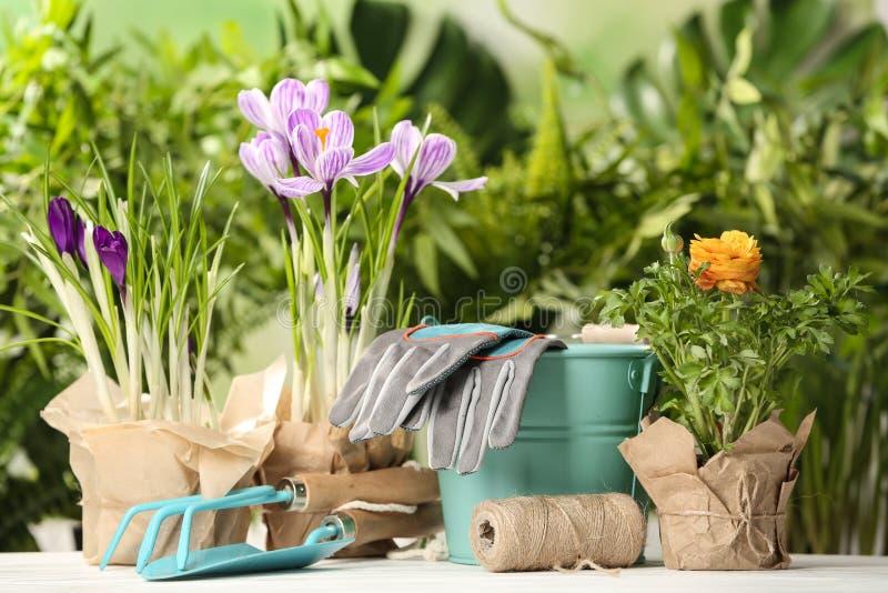 Flores florecientes y equipo que cultiva un huerto en la tabla foto de archivo
