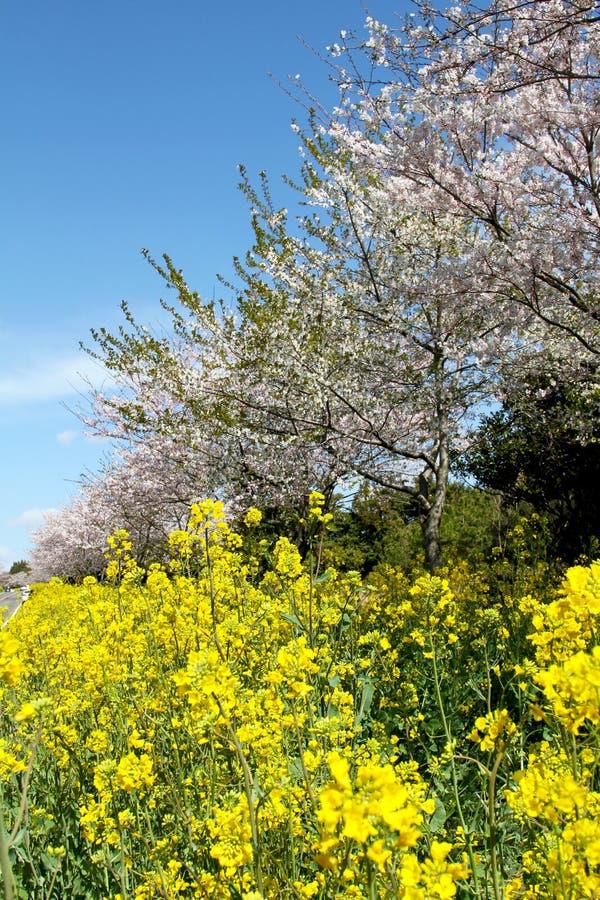 Flores florecientes y fondo azul foto de archivo