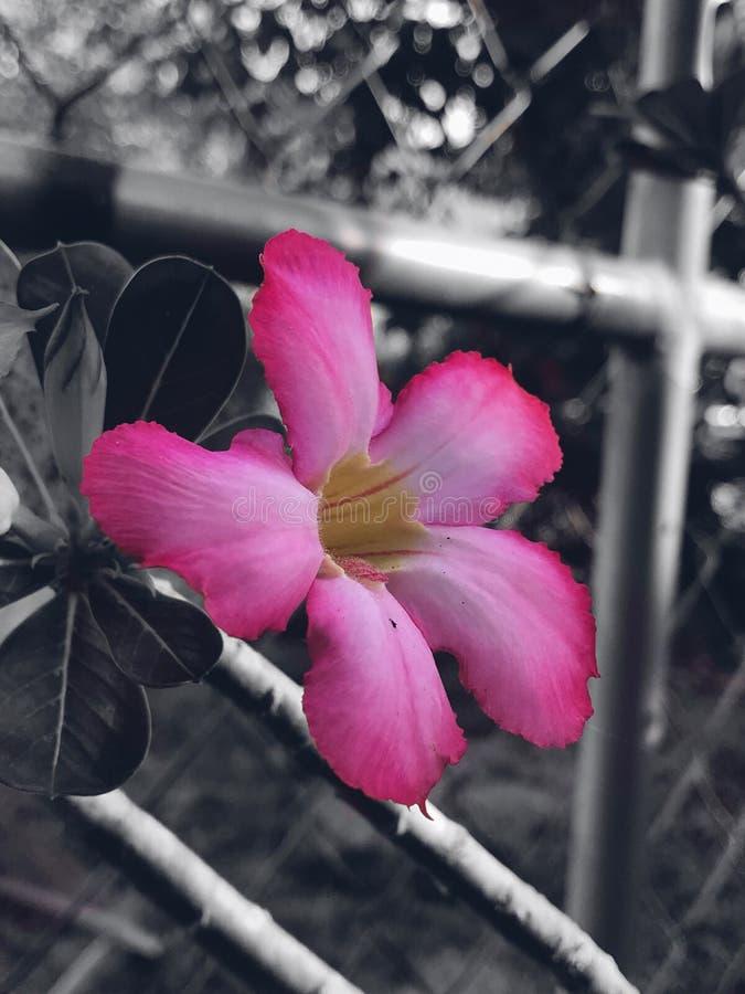 Flores floresce rosa imagem de stock