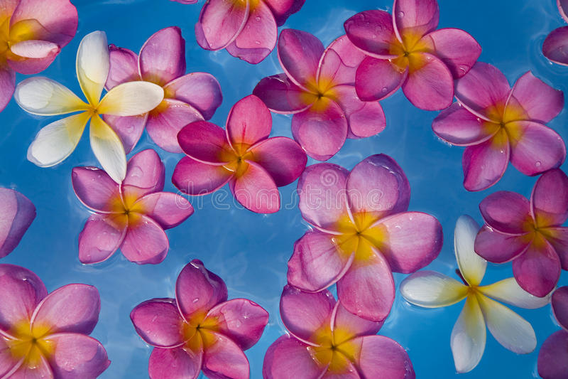 Flores flotantes fotos de archivo
