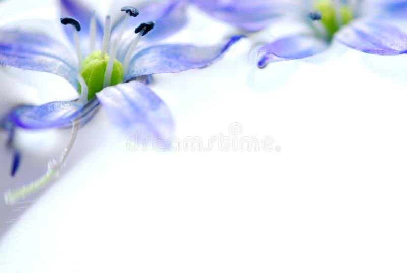 Flores flotantes imagen de archivo