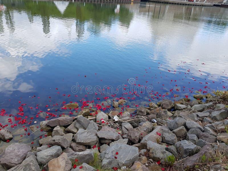 Flores flotantes 2 fotografía de archivo libre de regalías