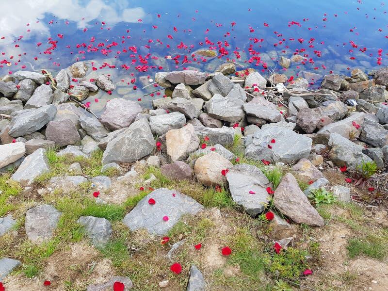 Flores flotantes foto de archivo