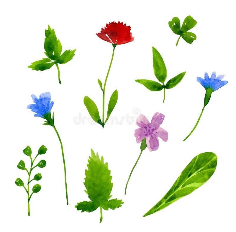 Flores, folhas, ramo Ervas do prado Elementos do projeto gráfico Coleção botânica Ilustração tirada mão da aquarela Isolado ilustração royalty free
