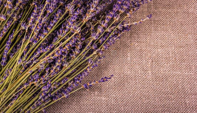 Flores fragantes secas de la lavanda en el fondo de lino fotos de archivo libres de regalías