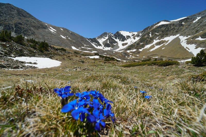 Flores Francia los Pirineos catalanes del paisaje de la montaña fotos de archivo libres de regalías