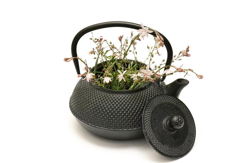Flores frescas blancas y rosadas en un pote del té negro con la tapa Vintage y pote rústico del té en el fondo blanco foto de archivo libre de regalías
