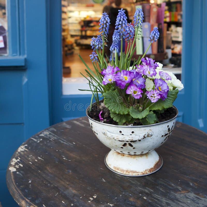 flores frescas coloridas da prímula da mola imagens de stock